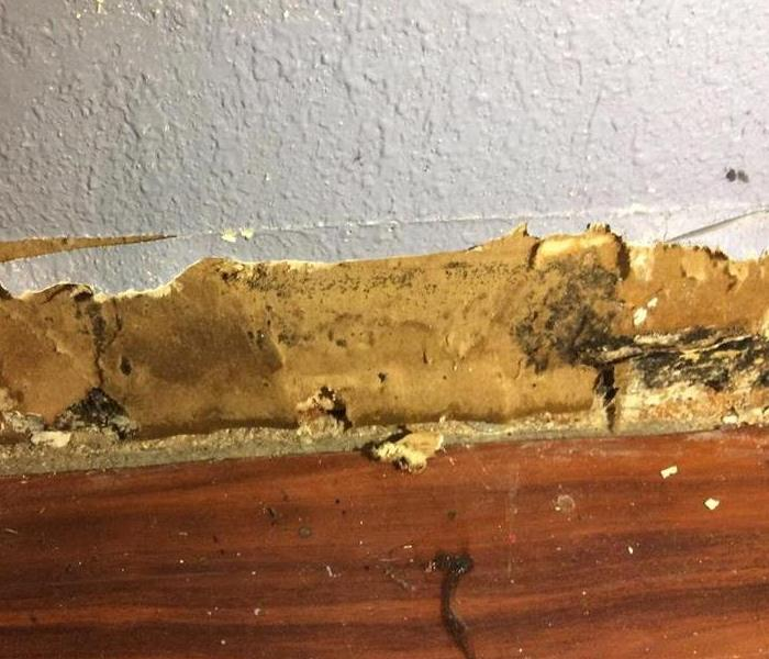 Mold Damage in San Antonio, TX