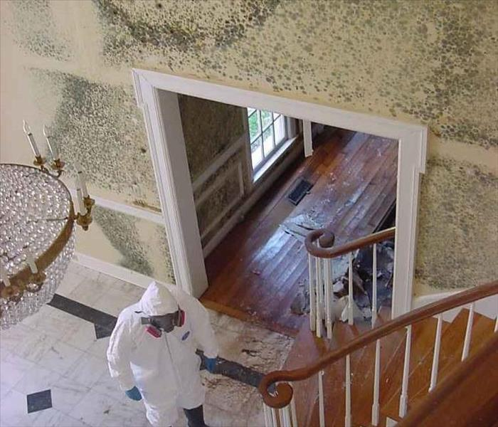 Mold Remediation All About Mold